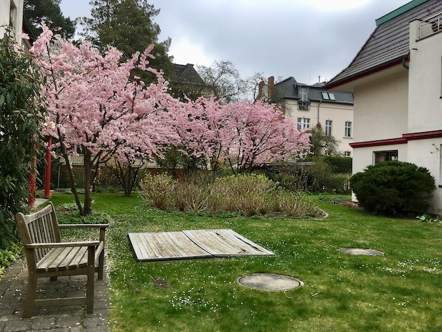 桜が綺麗な庭とベンチ