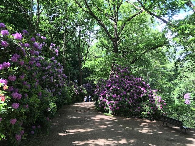 青々と茂った木々と、鮮やかな紫色の
